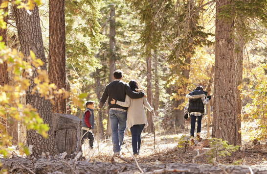 Family walking in forest.