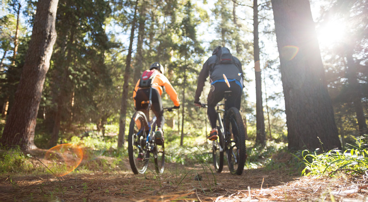Two mountain bikers riding through a forest.